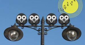 Comical bird boy band sing the dawn chorus