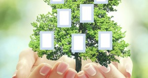 Hands holding family (genealogy ) tree with blank frames, on nat