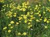 sance-fleurissement3